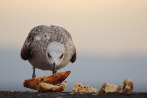 gabbiano_pizza_taddei_lr
