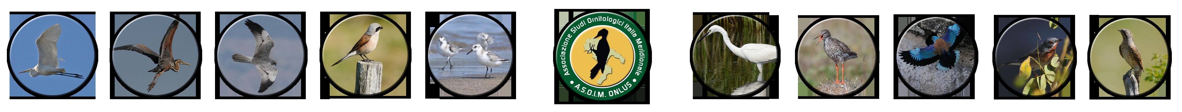 Attività di ricerca e sviluppo della conoscenza ornitologica