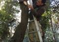 Progetto BIO.FOR.POLIS.Installate le cassette nido a Castelvolturno