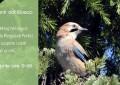 Trekking nel bosco della Reggia di Portici per scoprire i canti degli uccelli