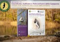 18 Monografia ASOIM – Ciconiformi, Suliformi e Pelecaniformi della Campania